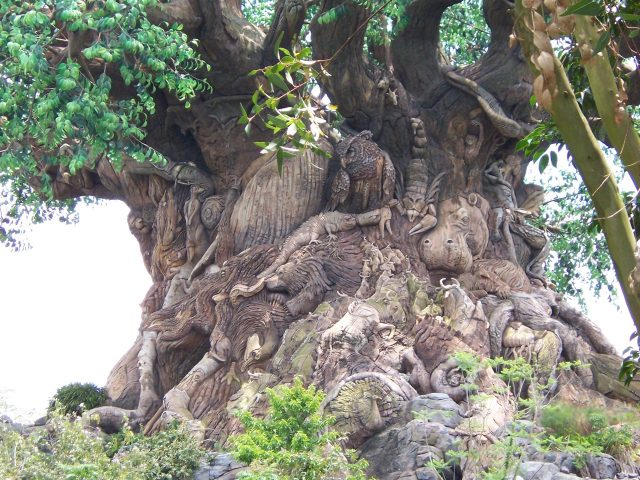 First Time Visitor Series III: Animal Kingdom