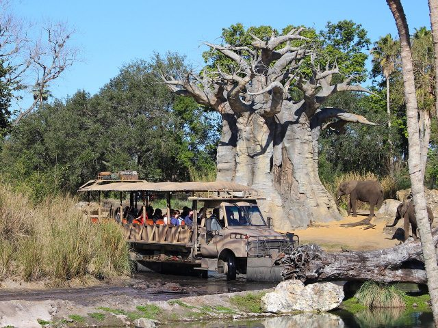 Attraction Focus: Kilimanjaro Safaris